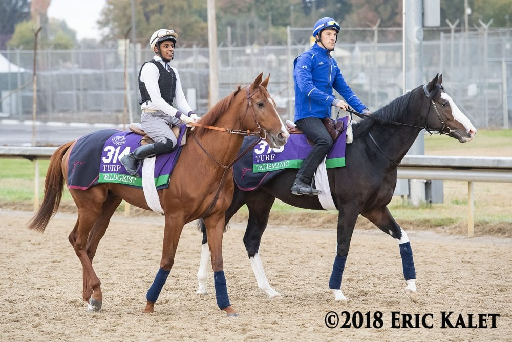 Twenty Three G1 Winners Among 50 Horses Lined Up For Hong