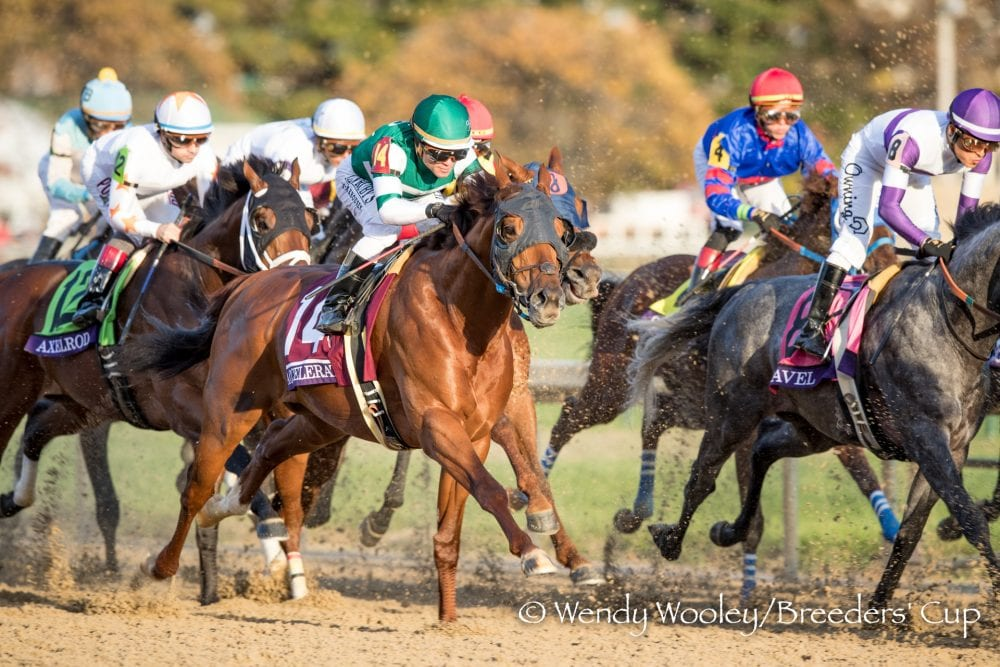 Classic Winner Accelerate Heads Final Ntra Poll Other