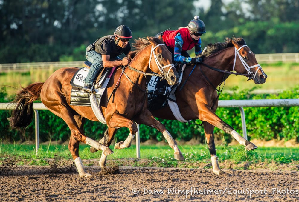 Audible 'Training Exceptionally Well' Ahead Of Harlan's