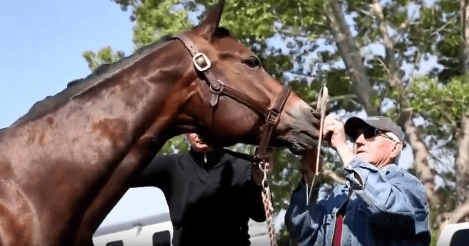 New Jersey Senate Bill Would Require Horse Auctions To Disclose Identifying Marks Online Horse Racing News Paulick Report