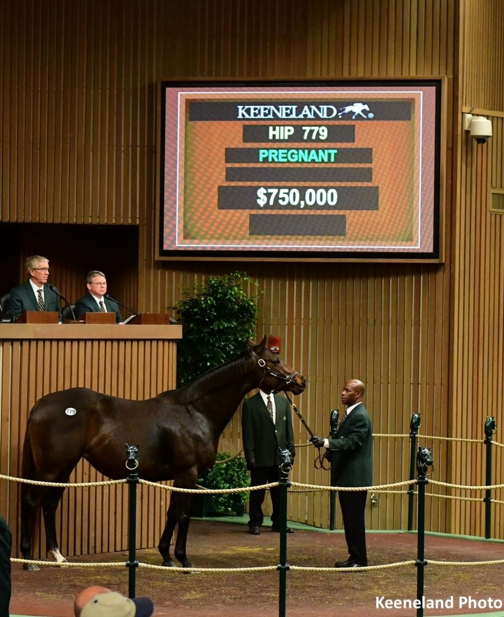 750 000 Distorted Humor Mare Leads Tuesday S Trade At Keeneland January Sale Horse Racing News Paulick Report