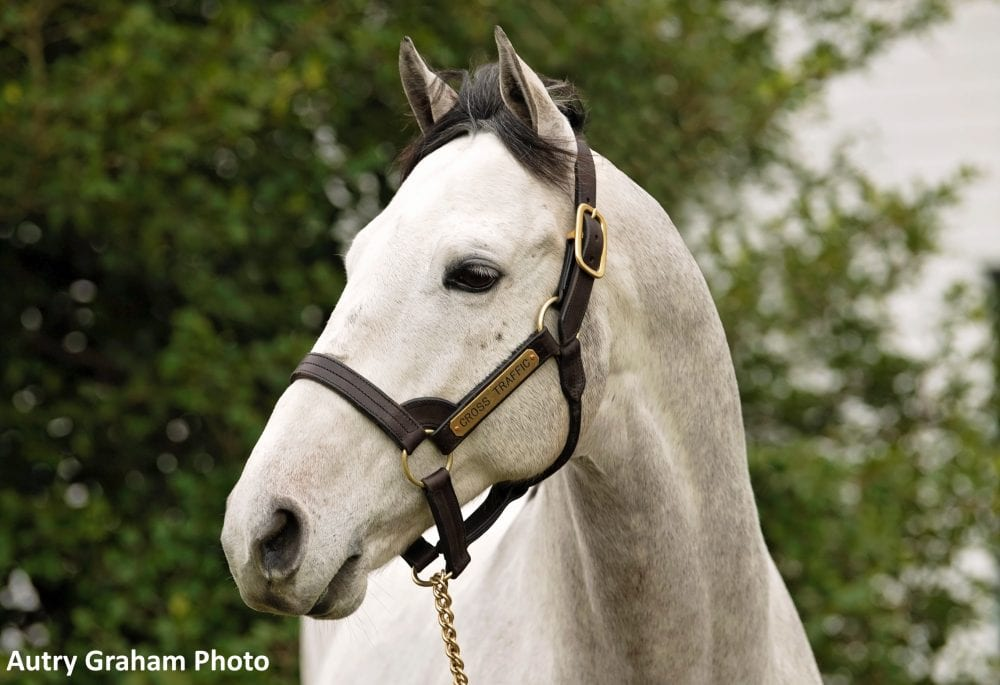 Five Mares That Took Cross Traffic To The Top Of The Freshman Sire Standings