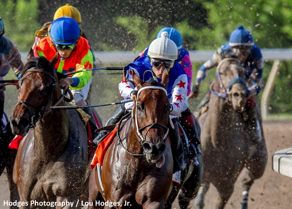 Ajax Horse Racing Schedule