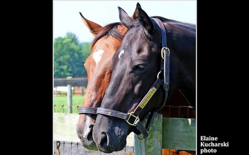 Scheinman An Everlasting Bond That Ties Horses And Humans
