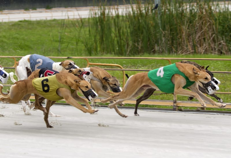 Has RCI Gone To The Dogs? California Regulators May Drop