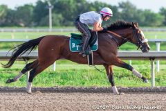 Nadal Archives Horse Racing News Paulick Report