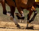 'It's A Bit Strange': Equine Hermaphrodite Faces Disqualification From Group Race