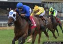 Pixelate Turns It On Late To Win At Pimlico